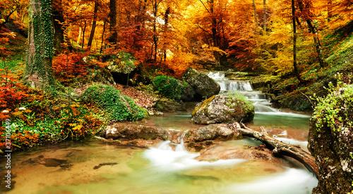 las-i-woda-jesienia