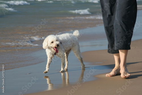 Small White Dog next to Owner's Legs on a Sandy Beach
