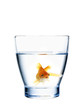 goldfish in a water glass