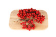 Still life with red natural rowan on a white background