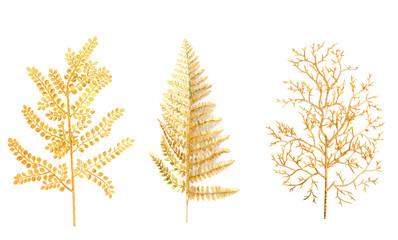 Gold branch of a fern