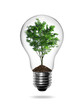 Bulb light with green tree inside isolated