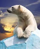 Fototapeta niedźwiedź - klimat - Dziki Ssak