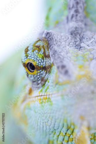 Foto op Plexiglas Kameleon Head of chameleon