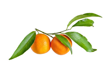fresh mandarin with leaf isolated on white