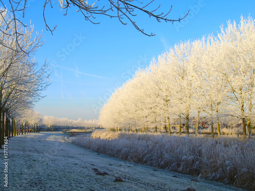 Trees with frost in winter
