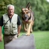 Master and his obedient (German shepherd) dog poster