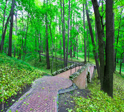 Beautiful park alley in spring - 37188460