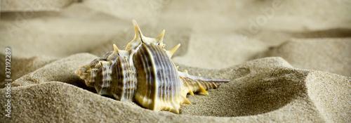 Sea shells on the sand. © gitusik