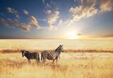 Fototapete Animals - Busch - Säugetiere