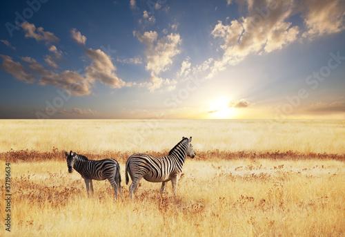 Fototapeta zwierzęta - krzew - Dziki Ssak