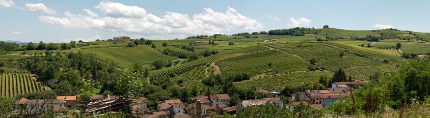 panoramica di una vigna sulle colline di Acqui Terme