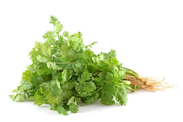 fresh coriander (cilantro) with roots on white background