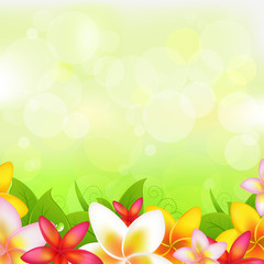 Natural Background With Garland From Plumeria