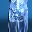 Beckenknochen
