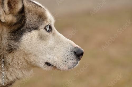 Fototapeten,adorable,tier,tier,arktis