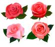 Big set of a beautiful colored roses. Vector