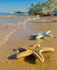 Beautiful Sea Stars Outdoor