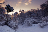Winter forest panorama at sunny evening
