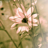 Fototapety Summer Flower