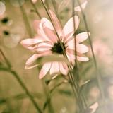 Fototapety Summer Flower