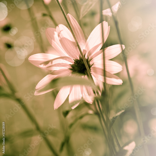 Summer Flower © B. and E. Dudziński