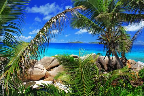 Fantastyczna plaża z palmami