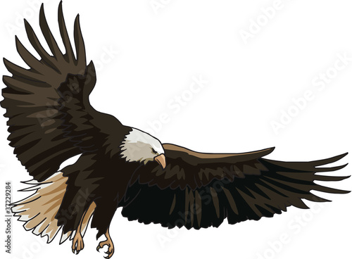 Landing of eagle
