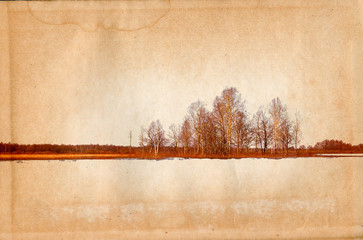 birch copse on old paper