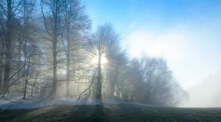 Nebelsonne im Winterwald