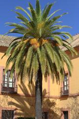 Palma nel cortile intorno di un palazzo