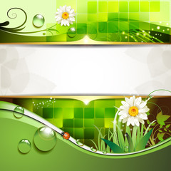Green background with daisy and drops of water