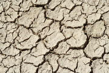 Dry Mud Cracks