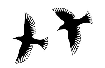 Angel Bird Silhouettes