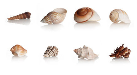 Collection Shells Marine Mollusks