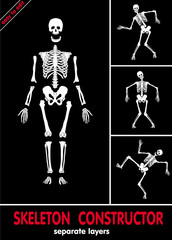 Human skeleton. Bones on separate layers. Easy to edit .