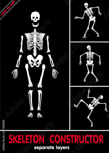 Human skeleton. Bones on separate layers. Easy to edit .