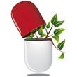 Pilule rouge plante