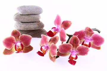 Pile of stones and an orchid flowers on white background