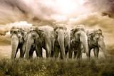 Fototapete Elegant - Herde - Säugetiere