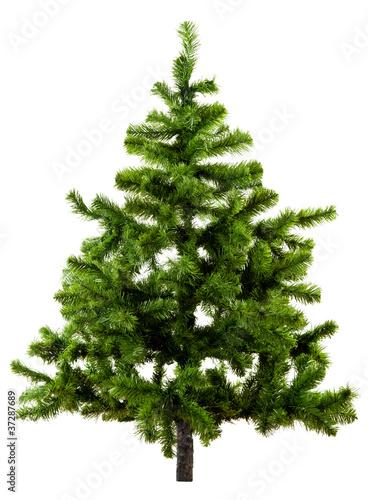 Christbaum ohne Schmuck auf weiß
