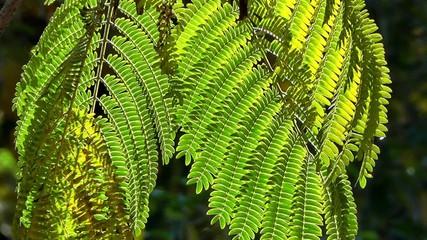 Back-lit leaves - environmental or ecology  theme