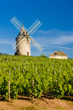 vineyards with windmill near Chénas, Beaujolais,Burgundy, France poster