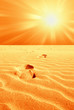 footprint in the desert with hot sun