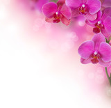 Fototapety Orchid Flower border design