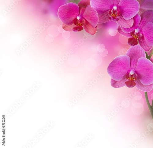 Orchideen-Blumengrenzentwurf