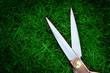 scissors green grass
