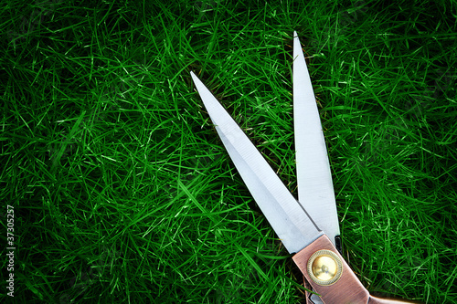 scissors green grass