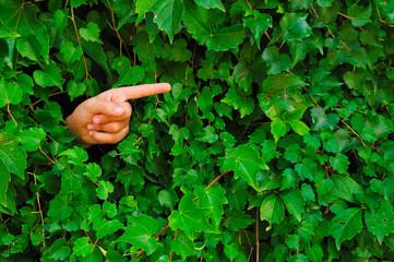 Dito che indica in mezzo ad un muro di edera