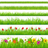 Fototapety Big Grass And Flower Set